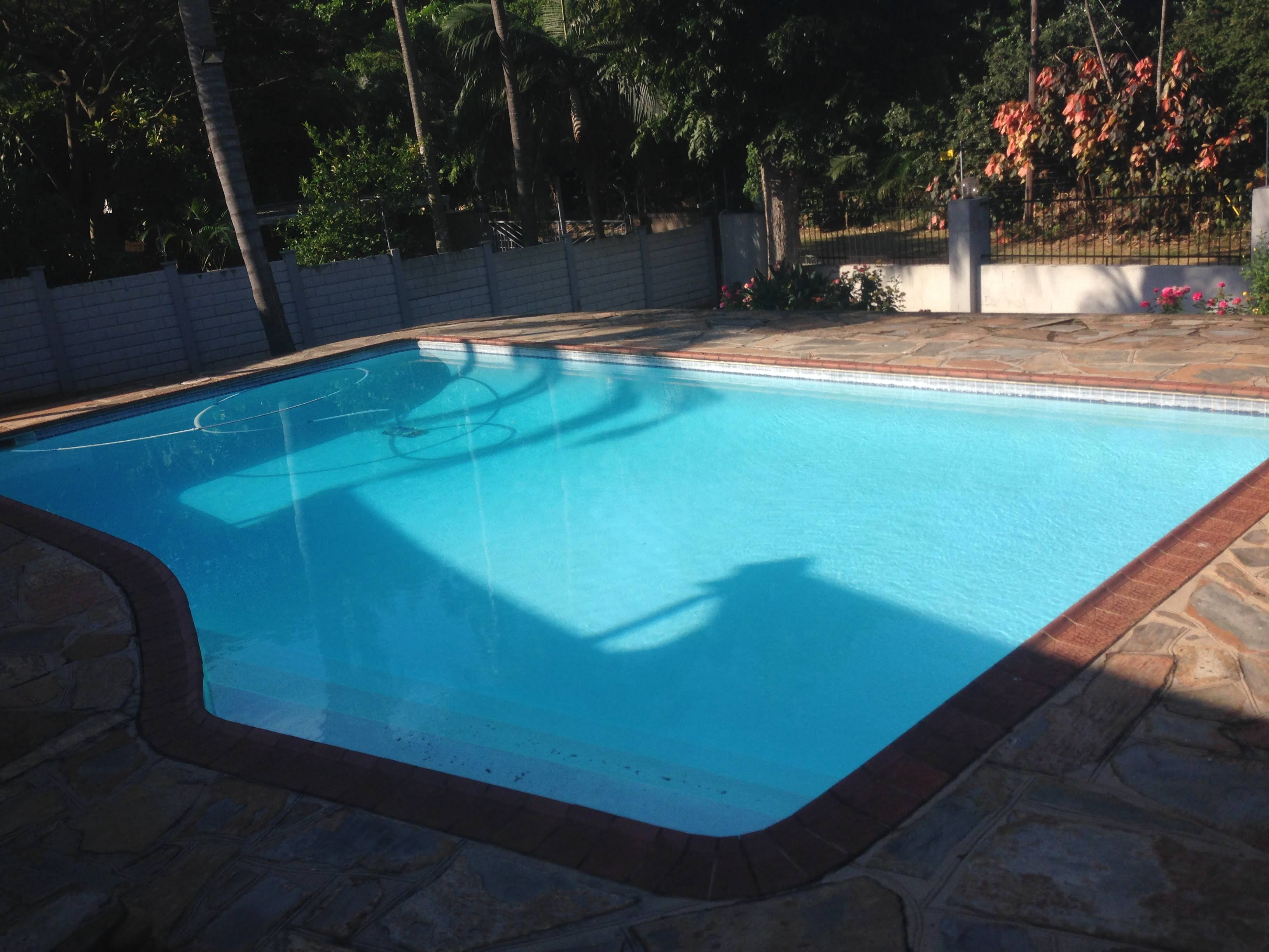 5 Steps to Prevent a Green Pool in Durban